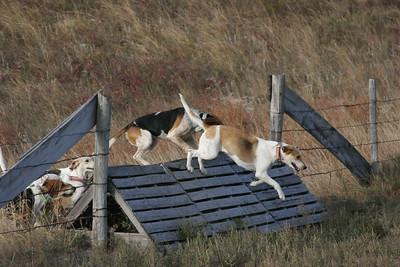 NHH Burwell Hunt 10-5-2012 016
