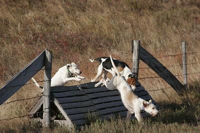 NHH Burwell Hunt 10-5-2012 026