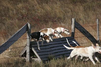NHH Burwell Hunt 10-5-2012 023
