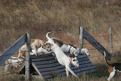 NHH Burwell Hunt 10-5-2012 019