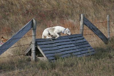 NHH Burwell Hunt 10-5-2012 014