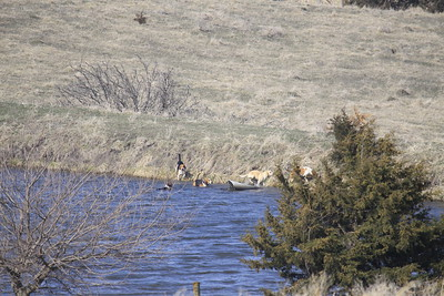 NHH Cumberland Hunt  4-3-2011 009