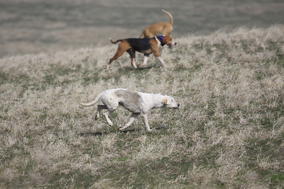NHH Cumberland Hunt  4-3-2011 014