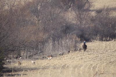 NHH Cumberland Hunt  4-3-2011 004