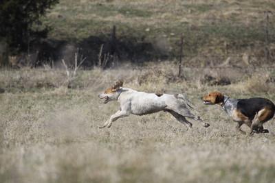 NHH Cumberland Hunt  4-3-2011 012