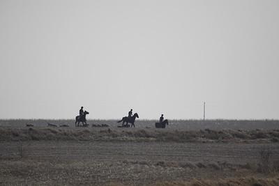 NHH Cumberland Hunt  4-3-2011 027