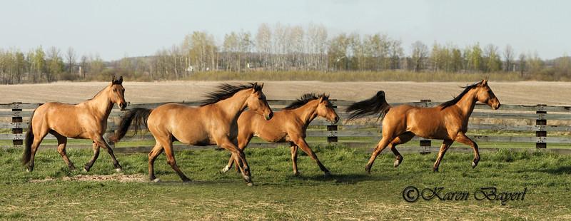 Equine Farm Shoots & Stallions
