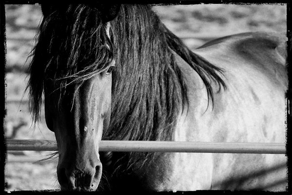 Equine Photo Gallery