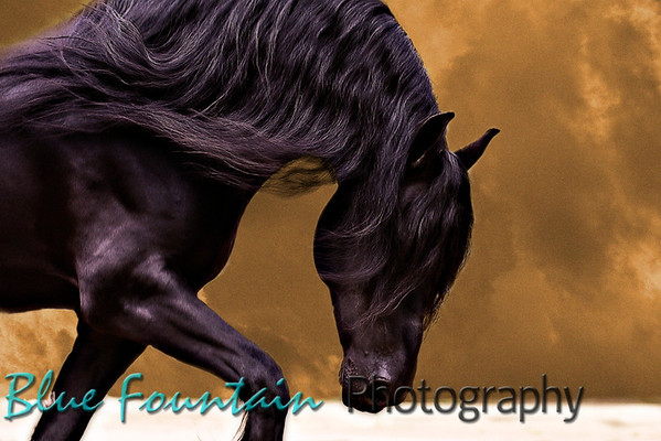Fabulous Friesians