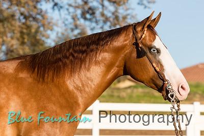 Nicolazzi Horses