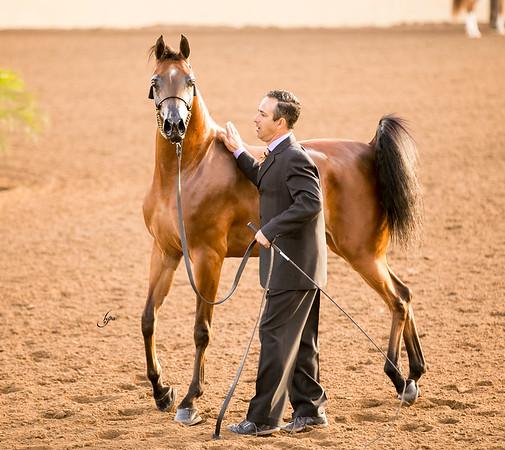 3yr old mares
