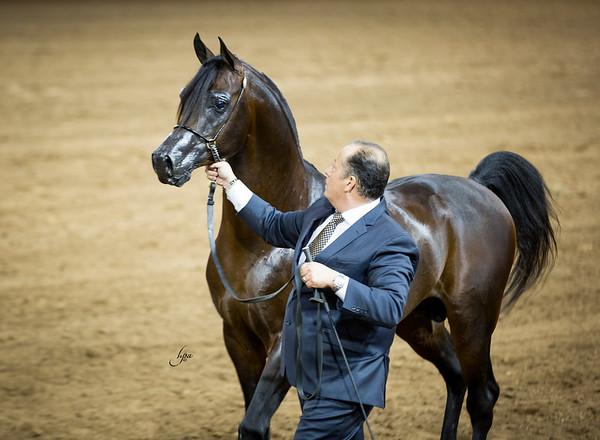 Guzzo Arabians International