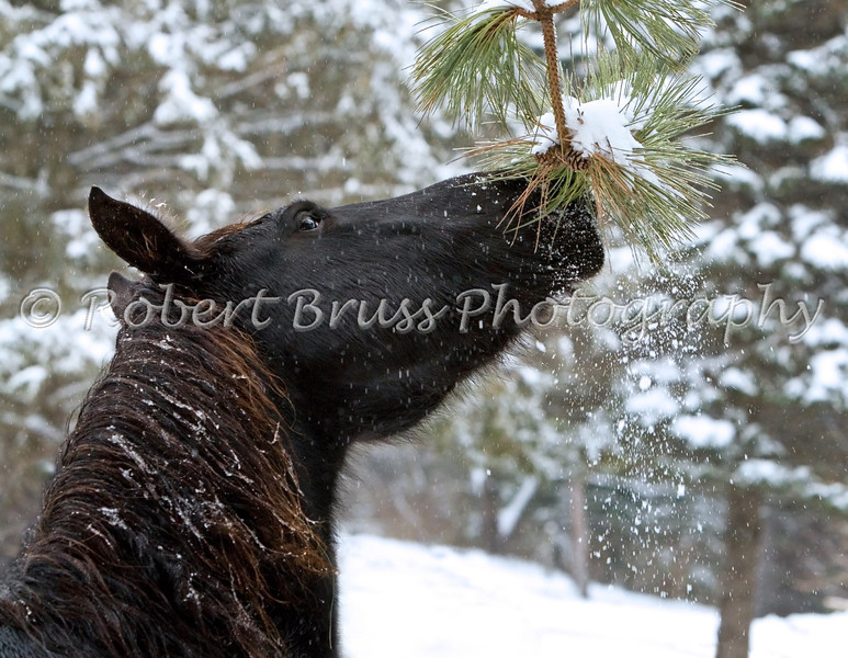 Horse Game - Shaking Snow From the Trees