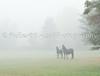 Martzen & Reikje in Fog