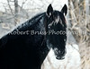 Thymer fan North Ster, 21 Below Zero (Owner Bob Bruss)