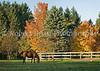 Abby's Pasture
