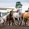 Horses through the gate