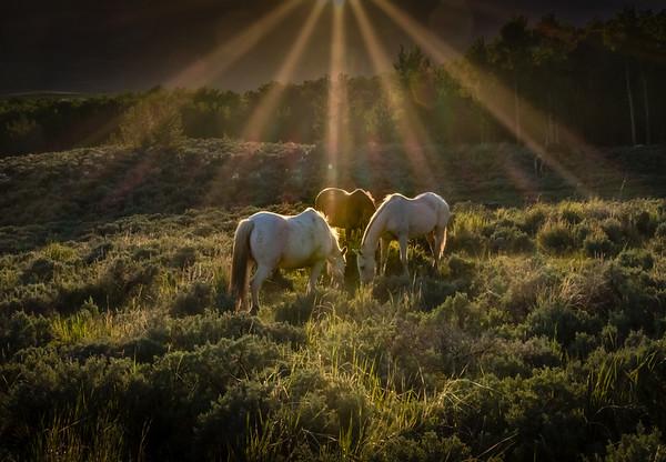 Sunrise Trinity