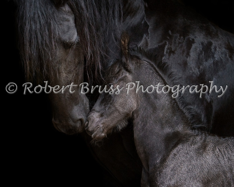 Eliza with 2-day old filly Margriet