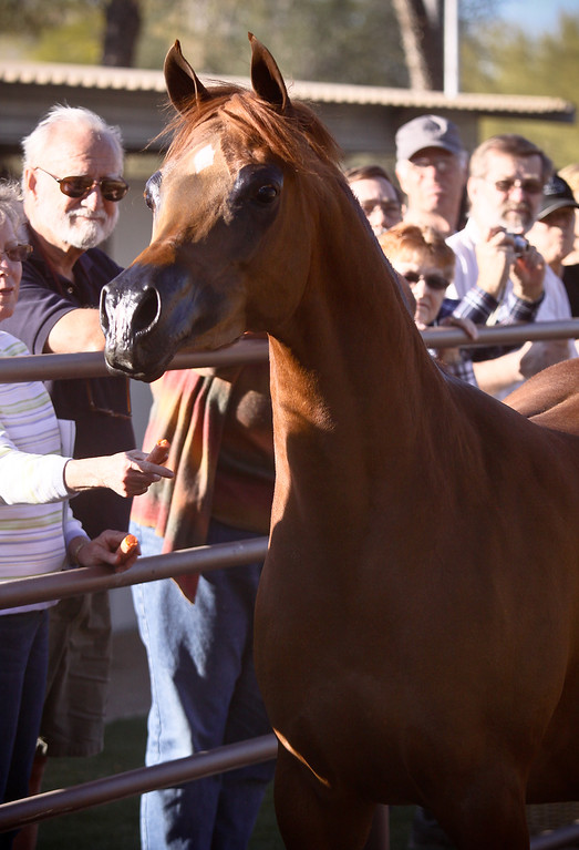 O'Neill Arabians 2012