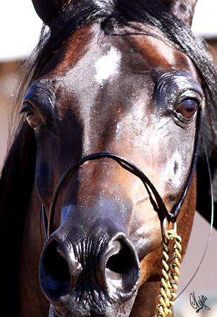 Arabian Expressions Open Barn