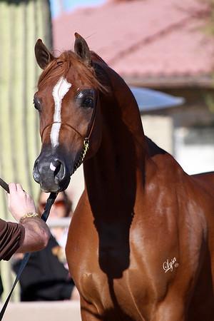 McDonald Arabians Open Barn