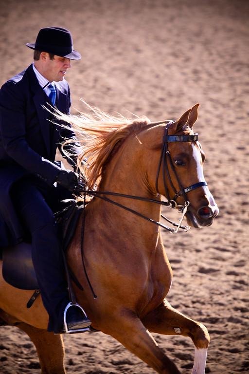 Scottsdale Arabian Horse Show 2012