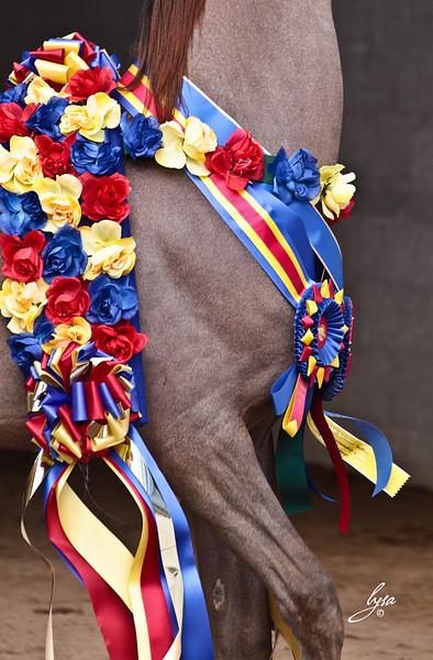 Scottsdale Horse Show 2011