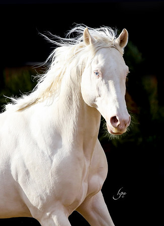 Beautiful stallion owned by Sylvia Zerbini