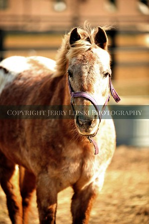 2015 March 29 - People and the Grounds - State Line Stables
