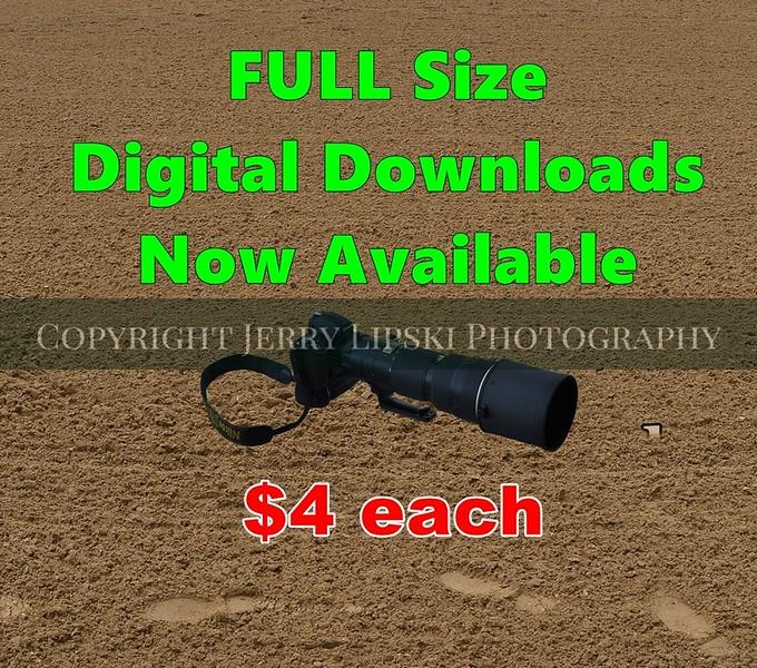 0 Digital Download