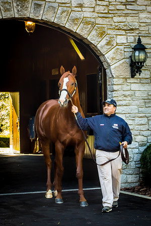 Justify, Coolmore America at Ashford Stud