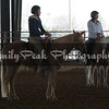 American Stock Horse Association Clinic