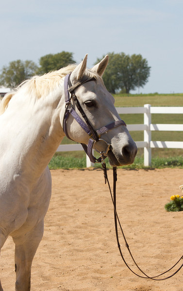 Horsey Palooza 2