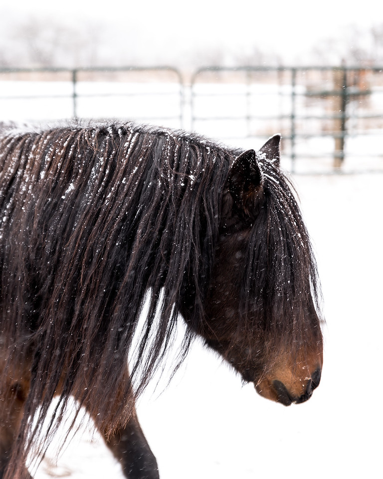 Christmas Mustang