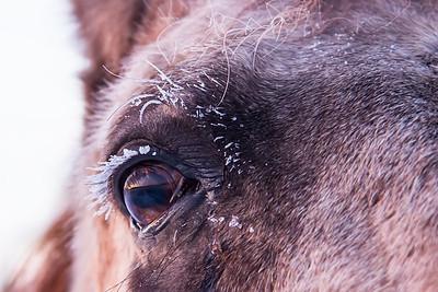 Buck Eye Frost