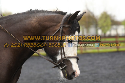 Walk Trot Equitation May8-_-15