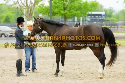 Begginner WTJ showmanship May23--18