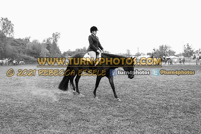 Jr Horse and Sr english pleasure may 23--15