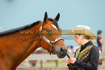 Jr Horse Halter May23--4