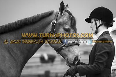 Jr Horse Halter May23--8
