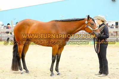 Jr Horse Halter May23--2