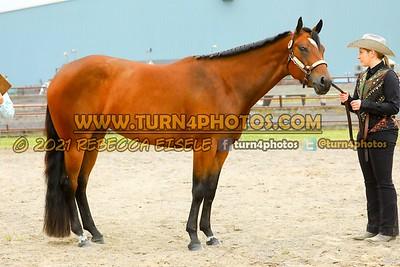 Jr Horse Halter May23--5