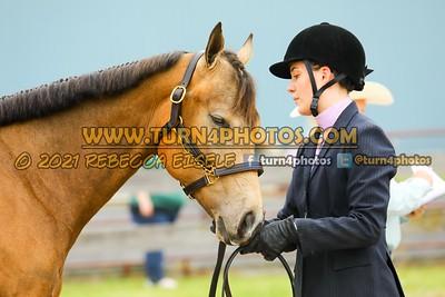 Jr Horse Halter May23--7