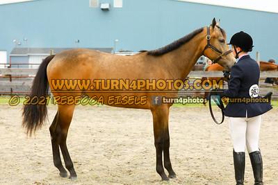 Jr Horse Halter May23--9