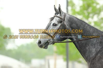 Sr english equitation  May23--14