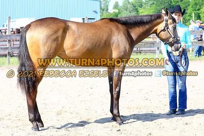 jr horse halter june 20--9
