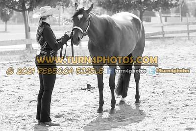 jr horse halter june 20--2