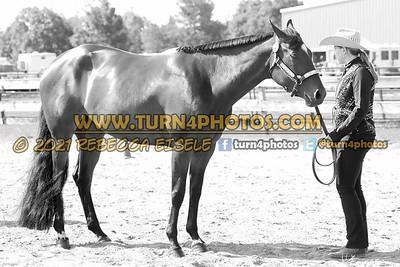 jr horse halter june 20--7