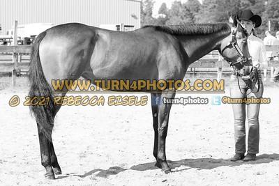 jr horse halter june 20--10